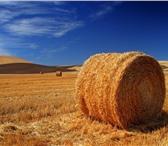 Фото в Домашние животные Корм для животных Продам сено 5000 рублей тонна. Урожай 2015 в Красноярске 5000