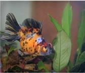 Изображение в Домашние животные Рыбки Компания www.rusaquarium занимается оптовой в Екатеринбурге 50