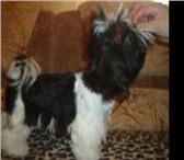 Фотография в Домашние животные Стрижка собак Предлагаю стрижку собак у себя или с выездом в Самаре 700