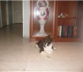 Фотография в Домашние животные Отдам даром Отдадим в добрые ручки беспородного щеночка-мальчика, в Екатеринбурге 0